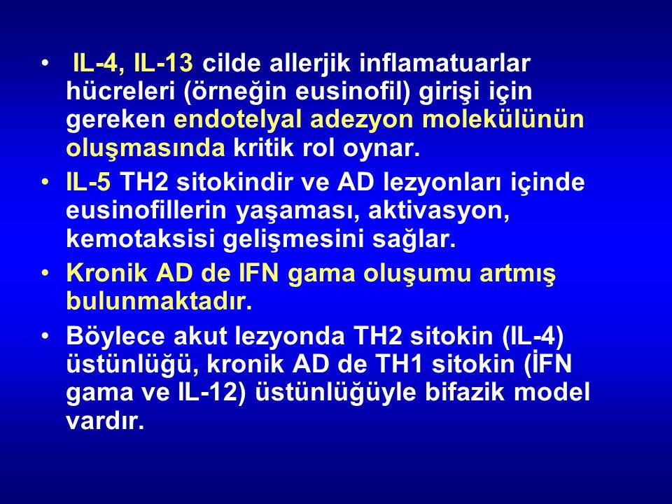 IL-4, IL-13 cilde allerjik inflamatuarlar hücreleri (örneğin eusinofil) girişi için gereken endotelyal adezyon molekülünün oluşmasında kritik rol oynar.