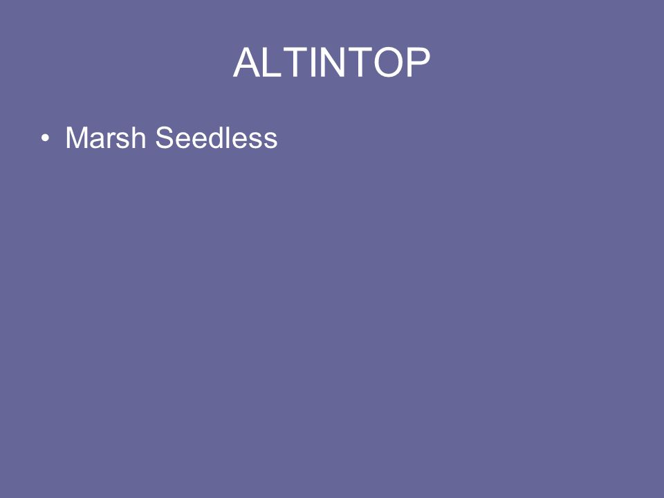ALTINTOP Marsh Seedless