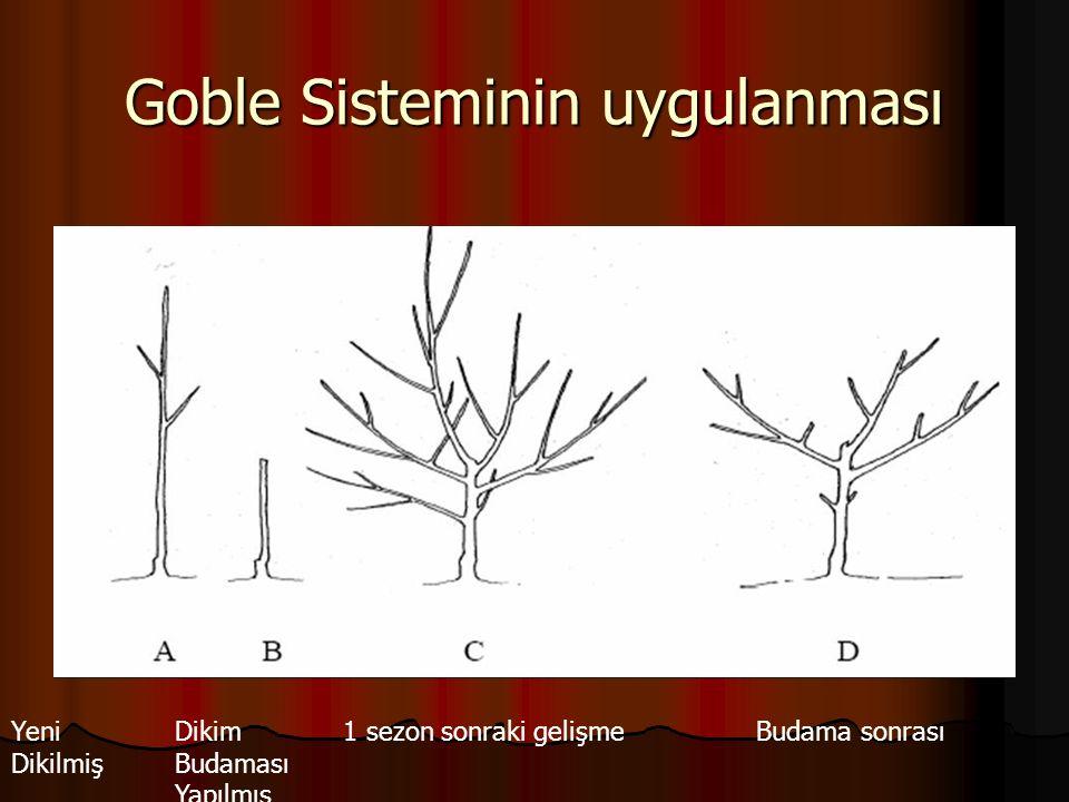 Goble Sisteminin uygulanması