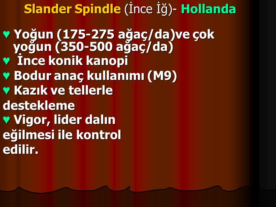 Slander Spindle (İnce İğ)- Hollanda