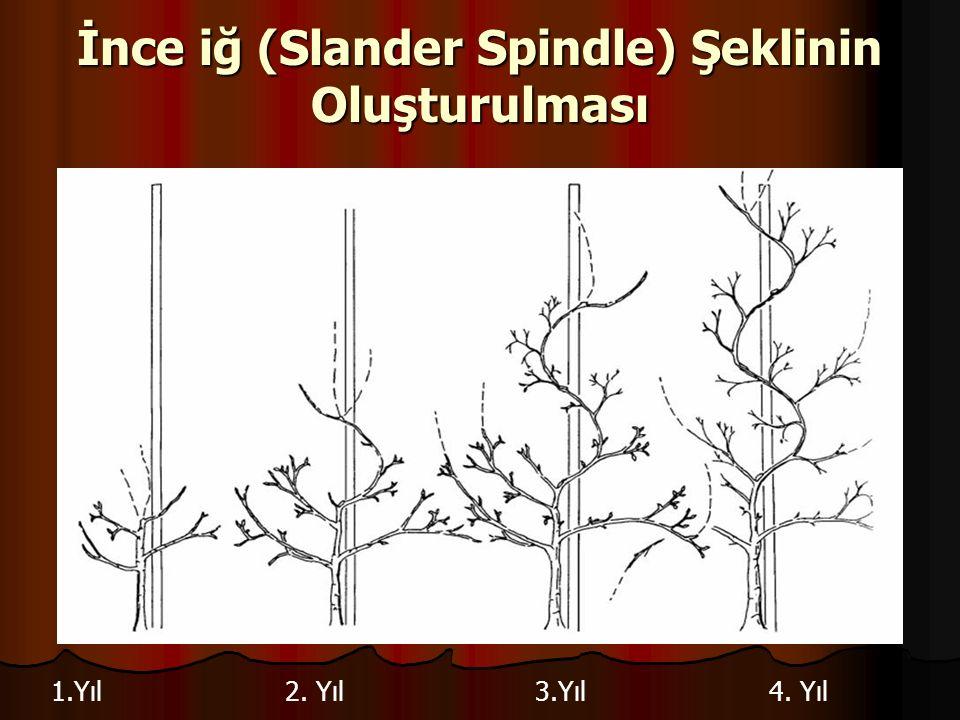 İnce iğ (Slander Spindle) Şeklinin Oluşturulması