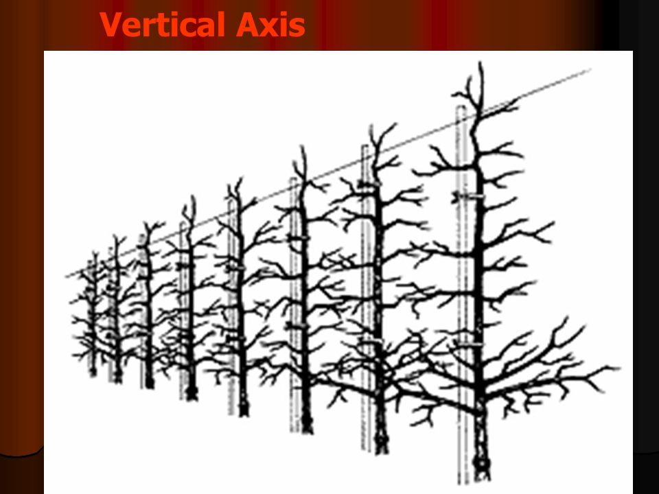 Vertical Axis