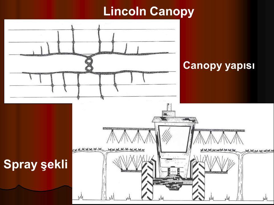 Lincoln Canopy Canopy yapısı Spray şekli