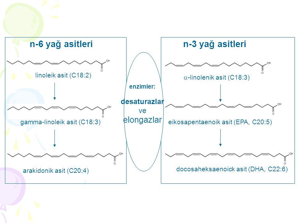 n-6 yağ asitleri n-3 yağ asitleri elongazlar desaturazlar ve