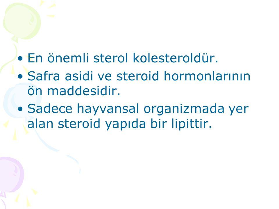 En önemli sterol kolesteroldür.