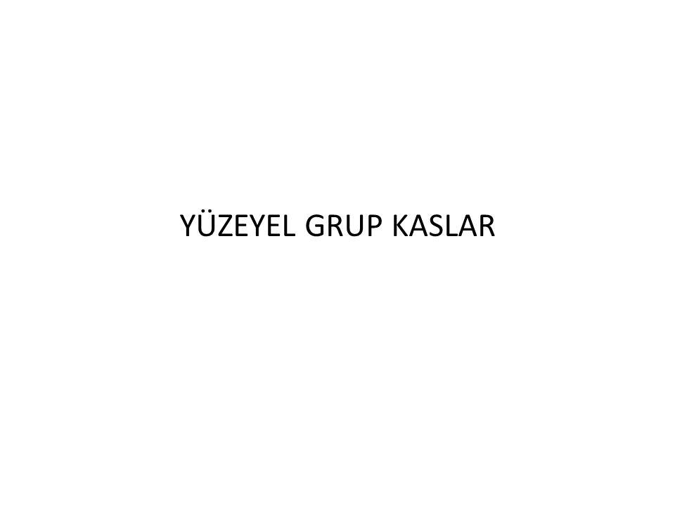 YÜZEYEL GRUP KASLAR