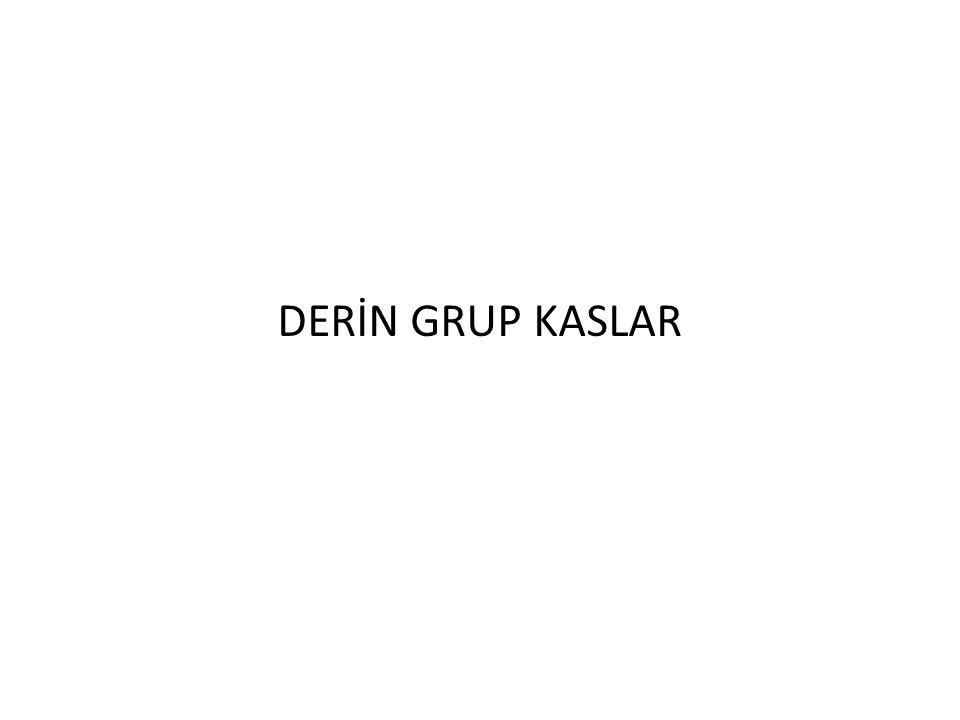 DERİN GRUP KASLAR
