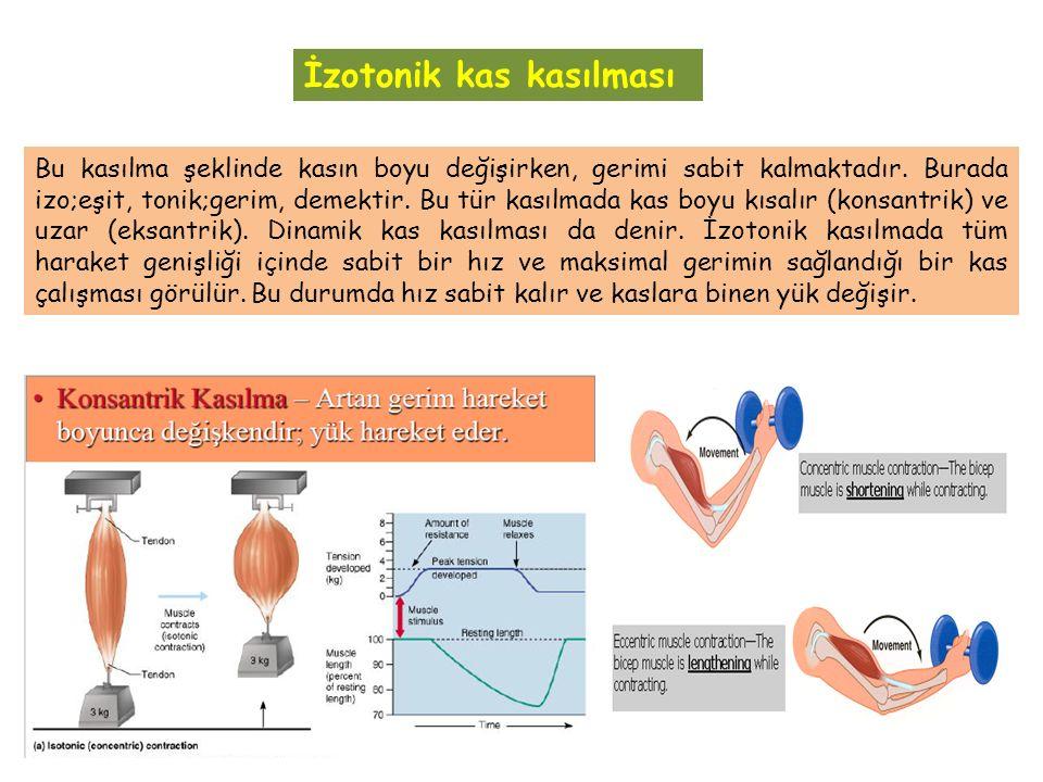 İzotonik kas kasılması