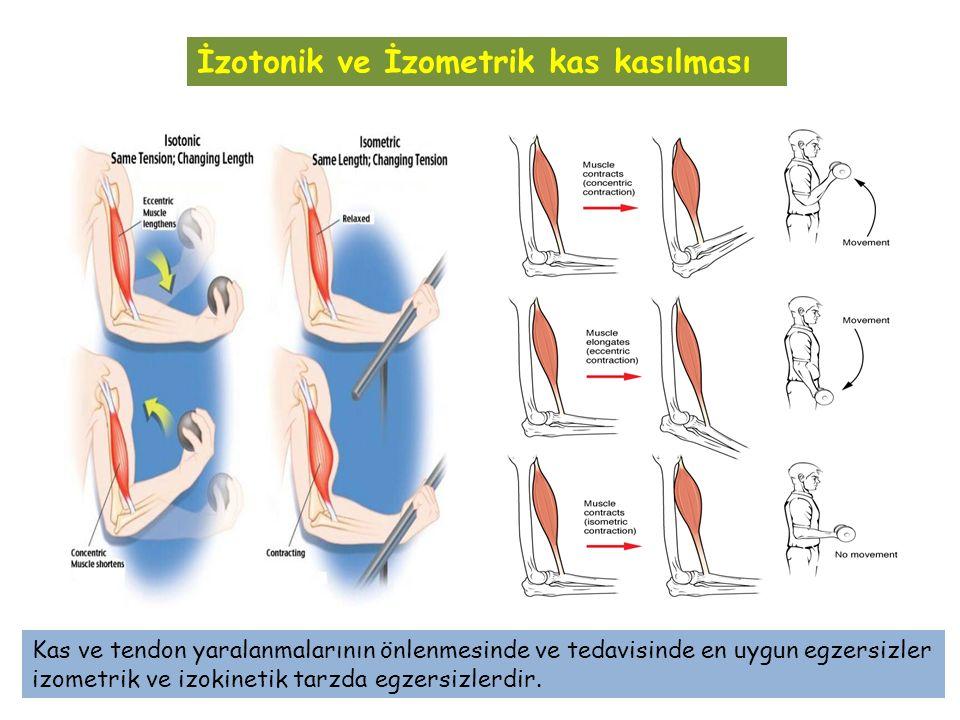 İzotonik ve İzometrik kas kasılması