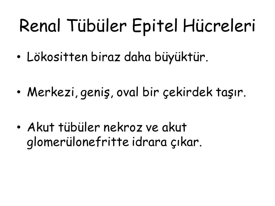 Renal Tübüler Epitel Hücreleri