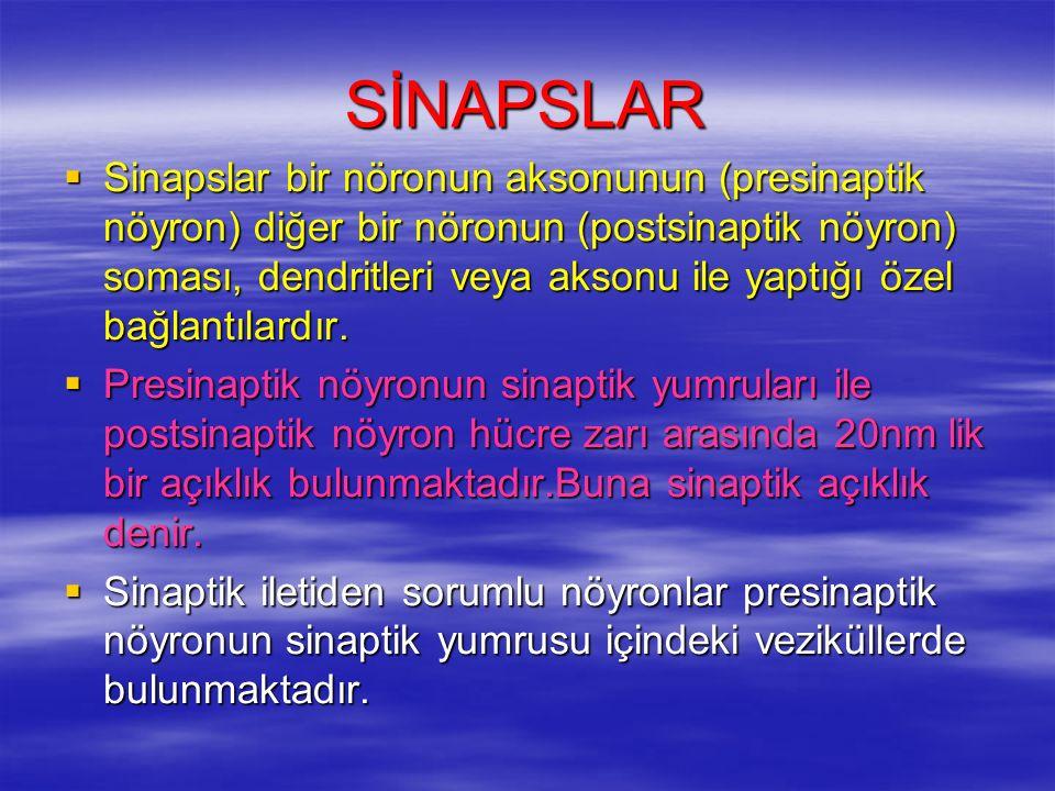 SİNAPSLAR