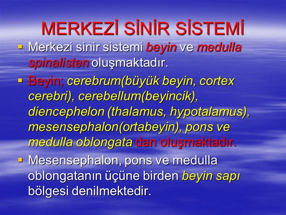 MERKEZİ SİNİR SİSTEMİ Merkezi sinir sistemi beyin ve medulla spinalisten oluşmaktadır.