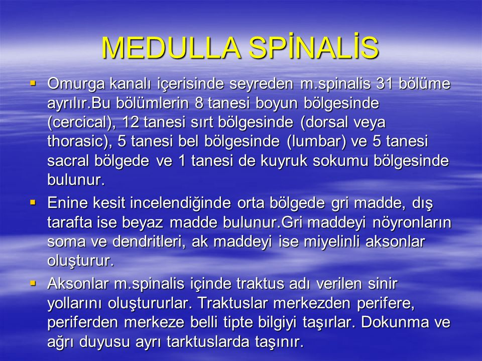 MEDULLA SPİNALİS