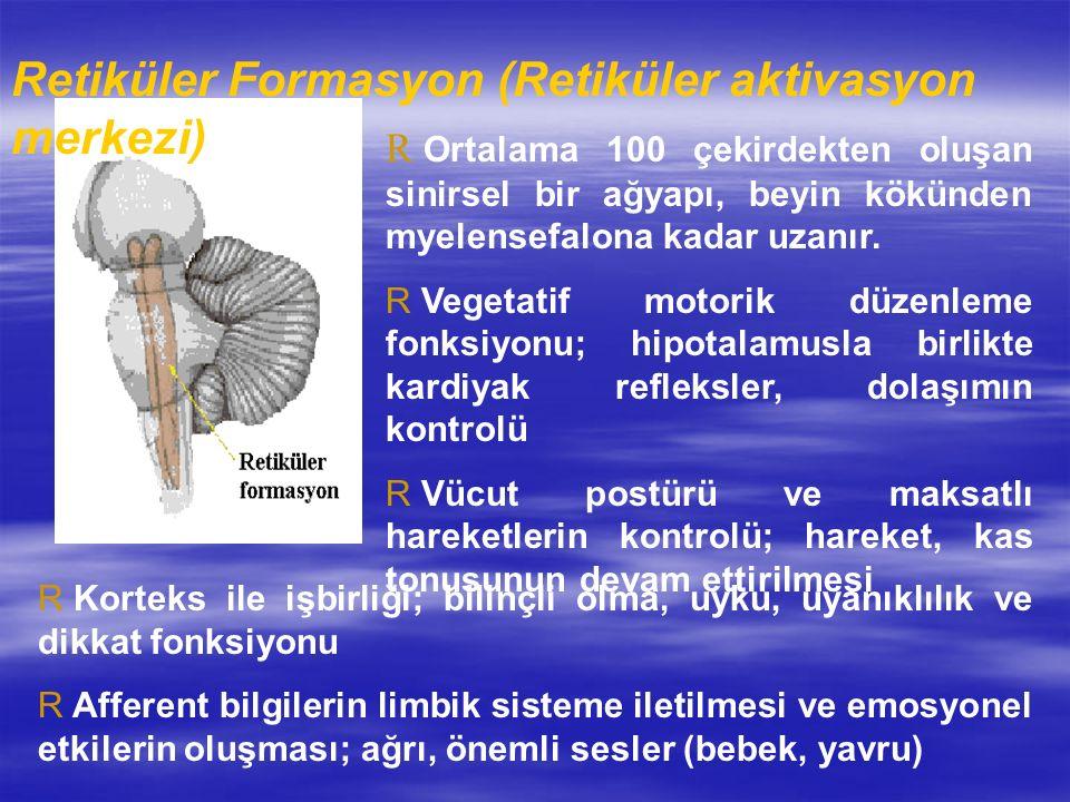 Retiküler Formasyon (Retiküler aktivasyon merkezi)