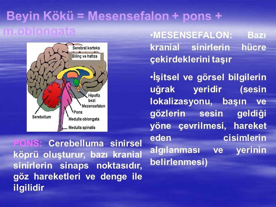 Beyin Kökü = Mesensefalon + pons + m.oblongata