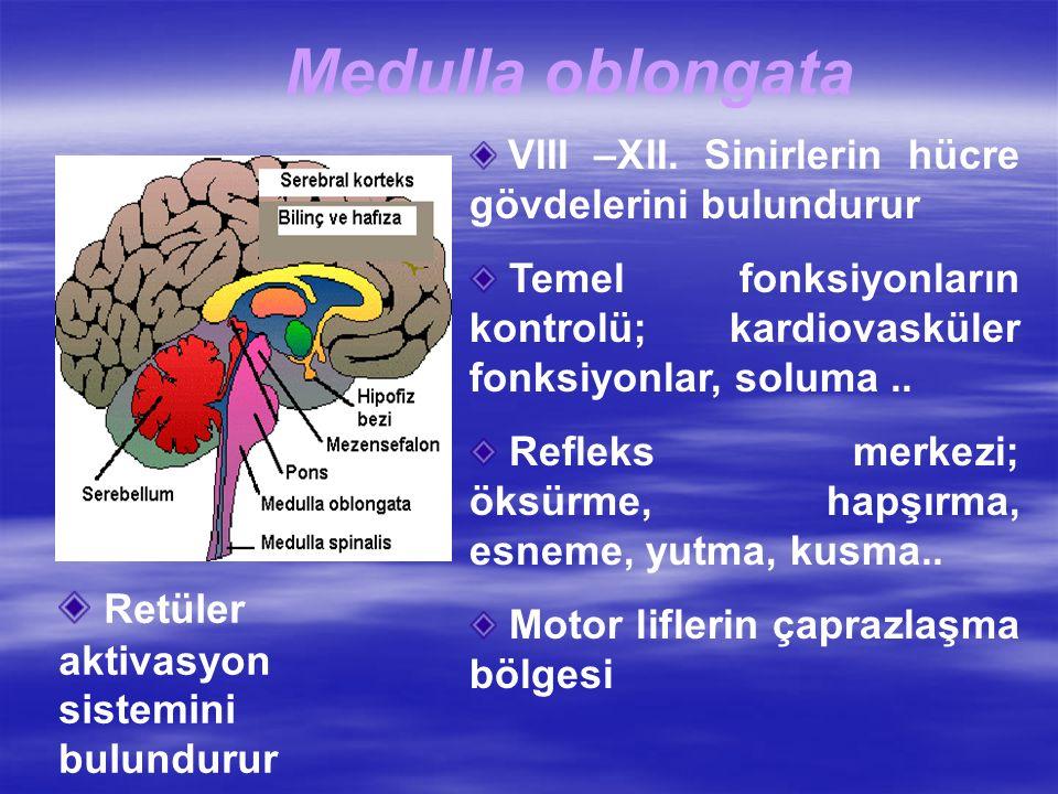 Medulla oblongata Retüler aktivasyon sistemini bulundurur