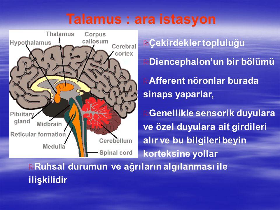Talamus : ara istasyon Çekirdekler topluluğu