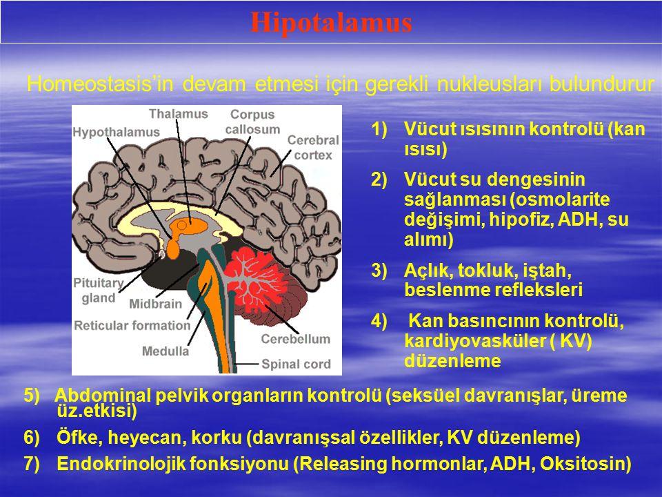 Hipotalamus Homeostasis'in devam etmesi için gerekli nukleusları bulundurur. Vücut ısısının kontrolü (kan ısısı)