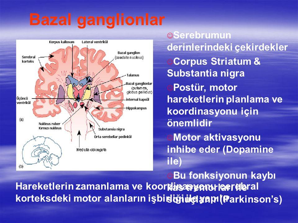 Bazal ganglionlar Serebrumun derinlerindeki çekirdekler