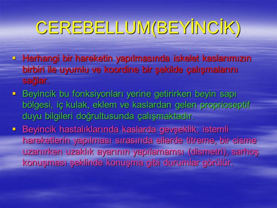 CEREBELLUM(BEYİNCİK)