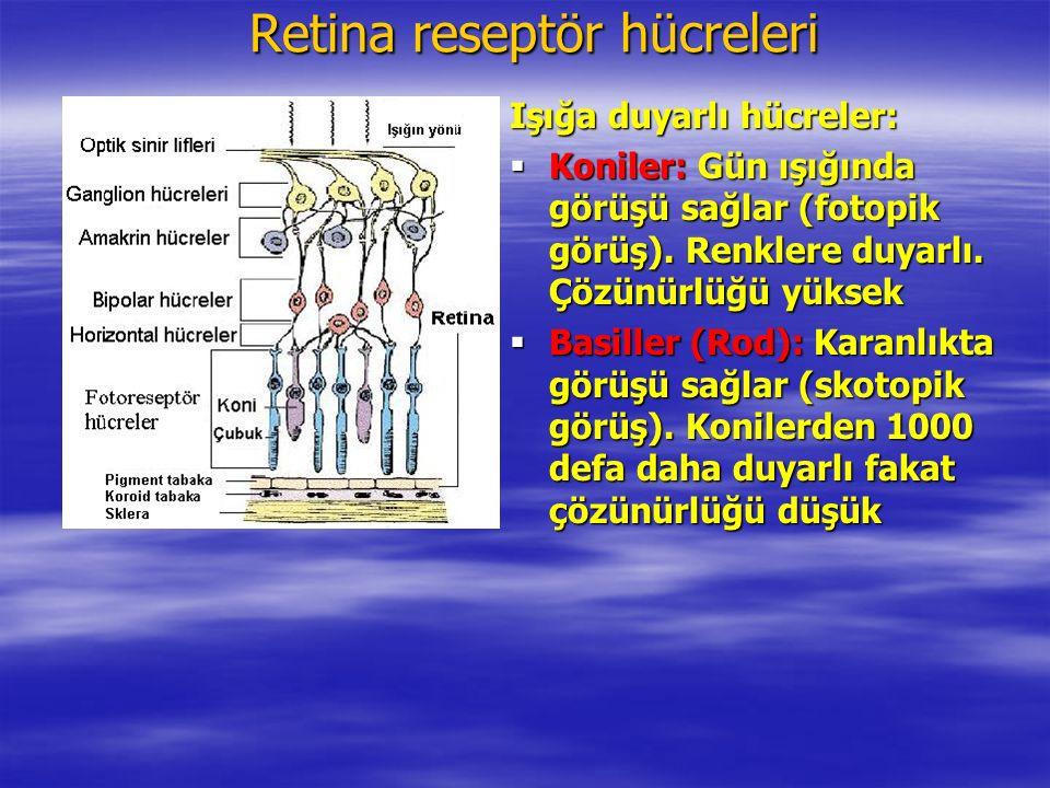 Retina reseptör hücreleri