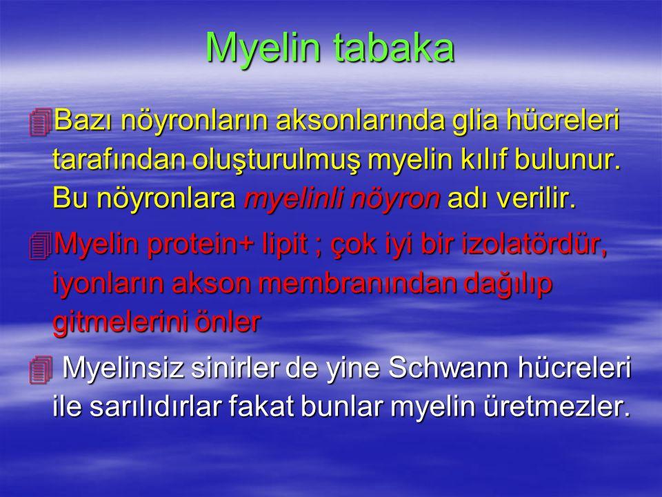 Myelin tabaka Bazı nöyronların aksonlarında glia hücreleri tarafından oluşturulmuş myelin kılıf bulunur. Bu nöyronlara myelinli nöyron adı verilir.