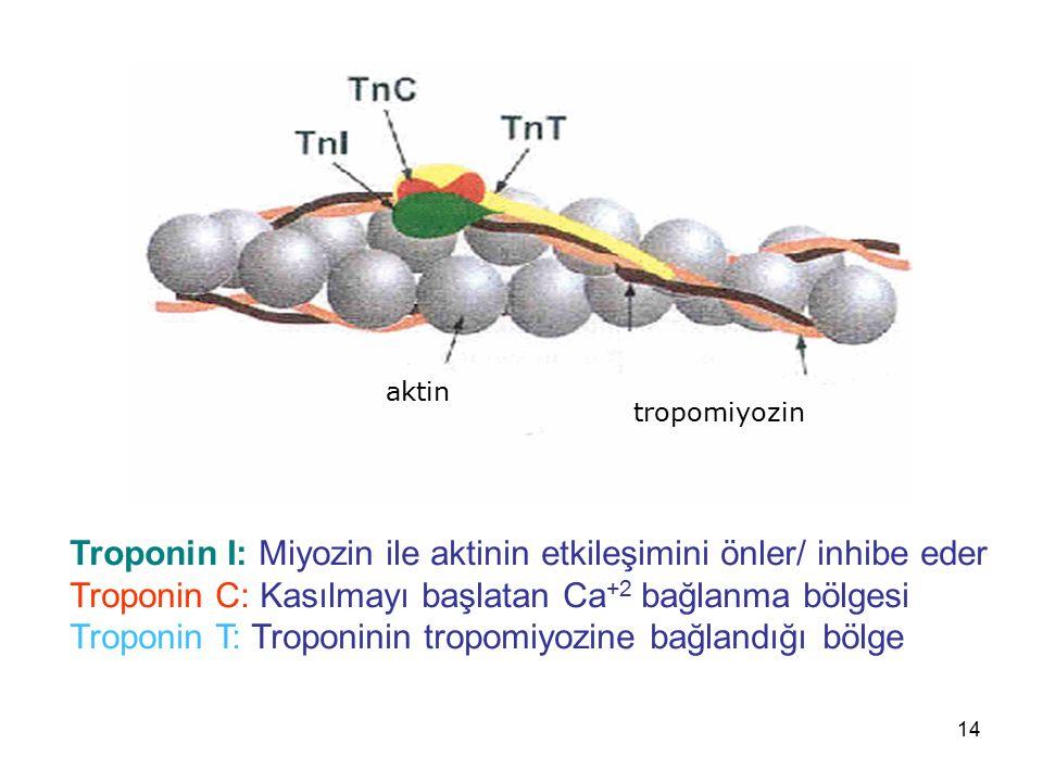 Troponin I: Miyozin ile aktinin etkileşimini önler/ inhibe eder