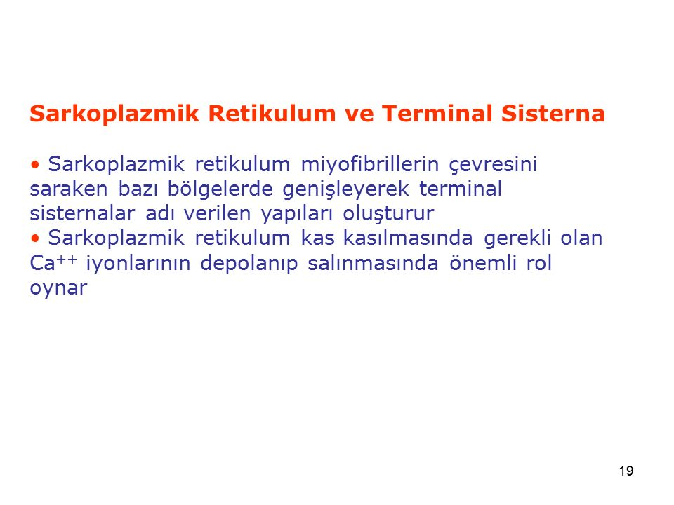 Sarkoplazmik Retikulum ve Terminal Sisterna
