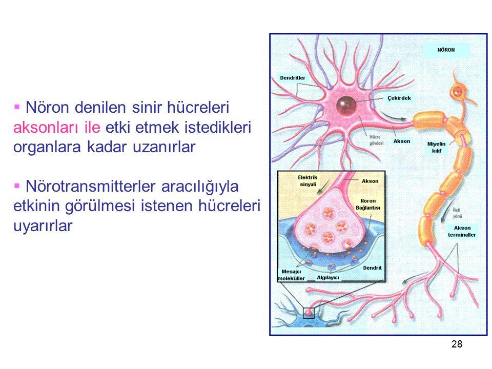 Nöron denilen sinir hücreleri aksonları ile etki etmek istedikleri organlara kadar uzanırlar