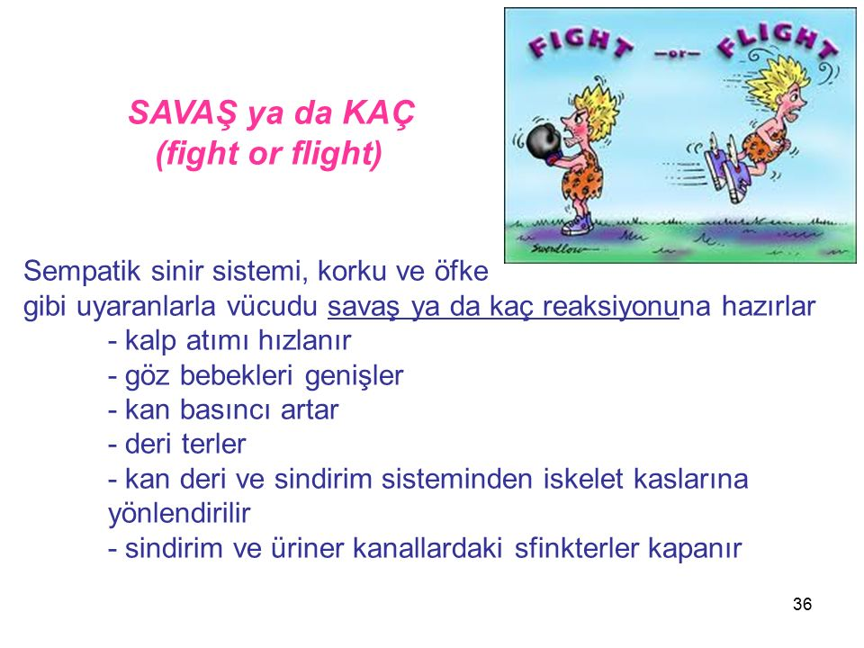 (fight or flight) SAVAŞ ya da KAÇ