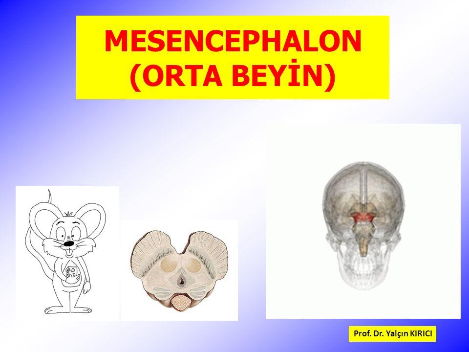MESENCEPHALON (ORTA BEYİN)
