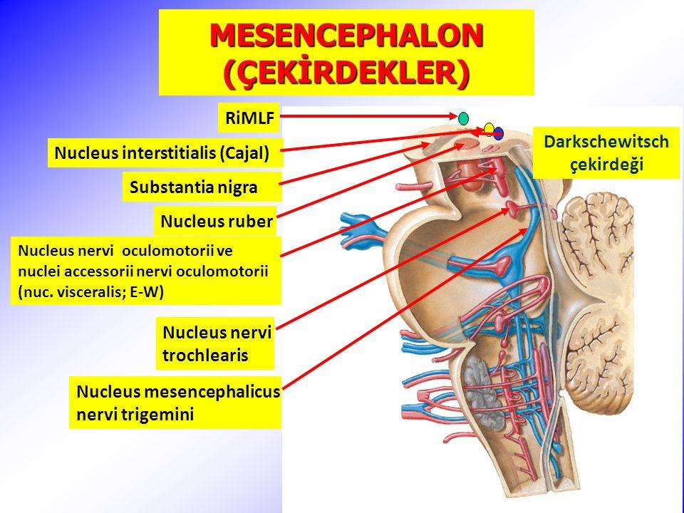 MESENCEPHALON (ÇEKİRDEKLER)