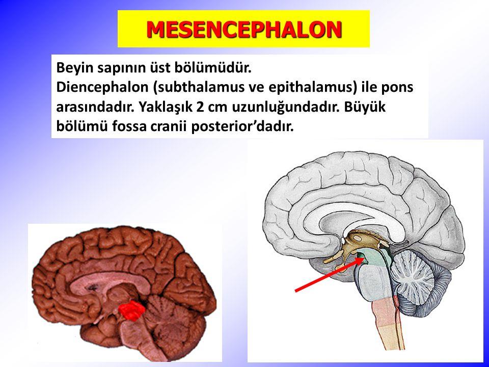 MESENCEPHALON Beyin sapının üst bölümüdür.
