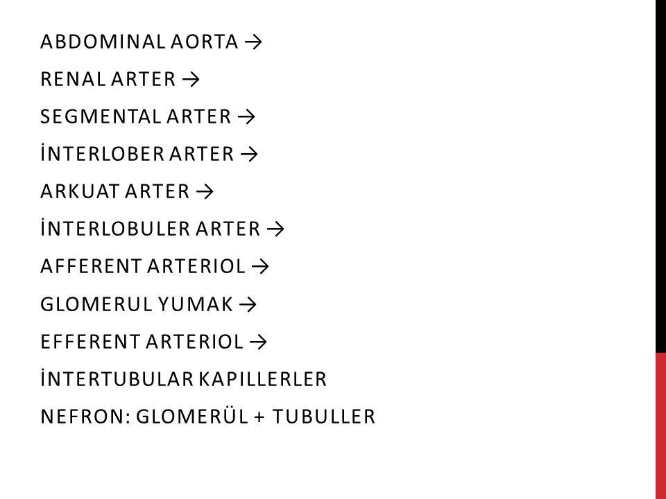 Abdominal aorta → Renal arter → Segmental arter → İnterlober arter → Arkuat arter → İnterlobuler arter →