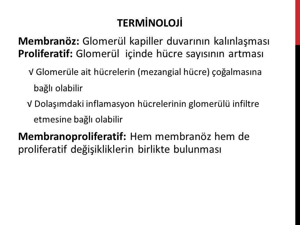 √ Glomerüle ait hücrelerin (mezangial hücre) çoğalmasına