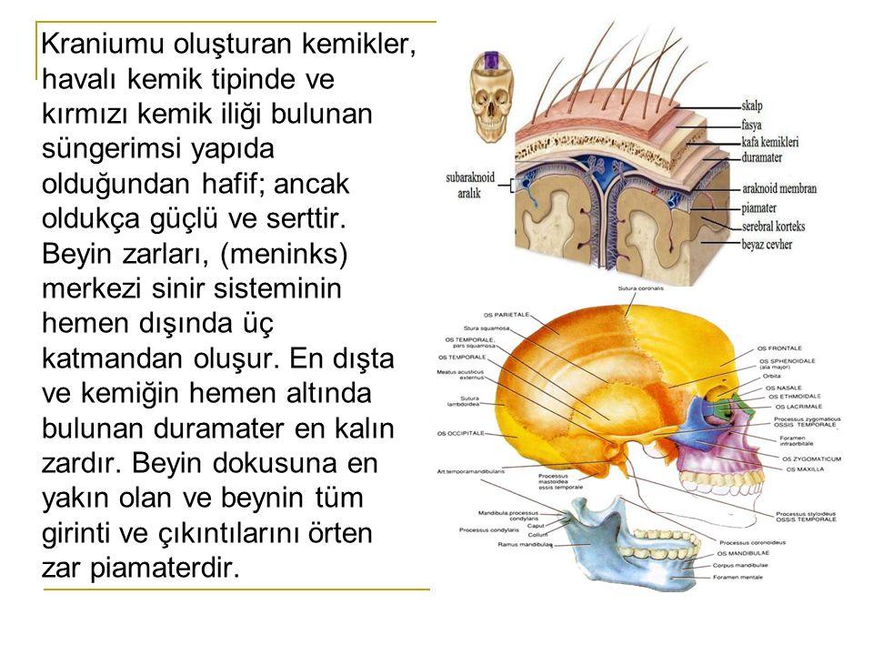 Kraniumu oluşturan kemikler, havalı kemik tipinde ve kırmızı kemik iliği bulunan süngerimsi yapıda olduğundan hafif; ancak oldukça güçlü ve serttir.