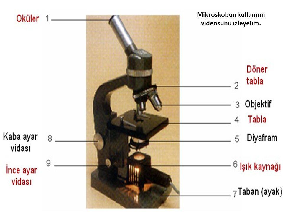 Mikroskobun kullanımı videosunu izleyelim.