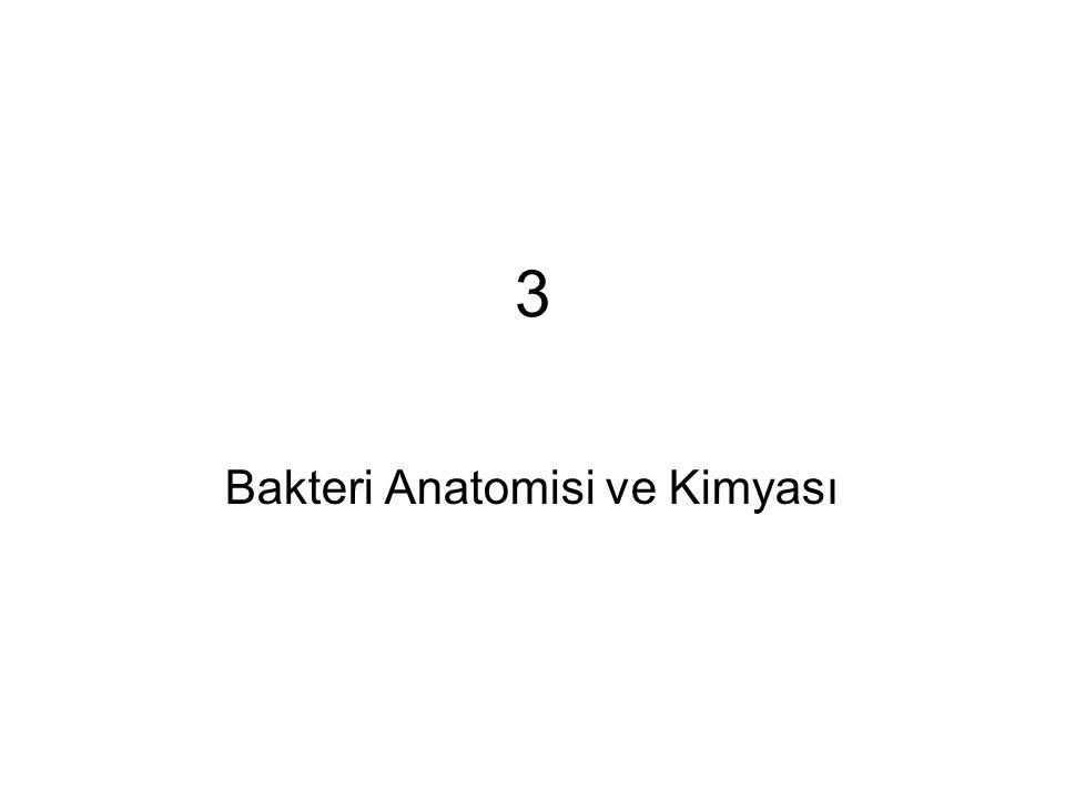 Bakteri Anatomisi ve Kimyası