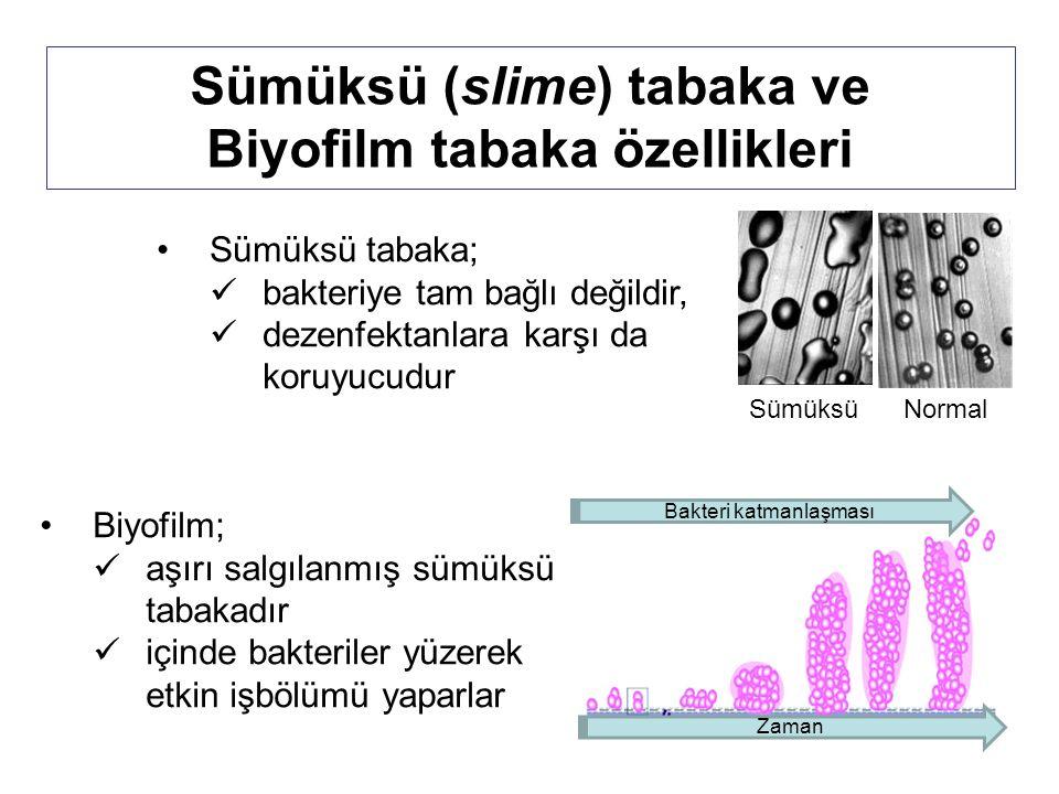 Sümüksü (slime) tabaka ve Biyofilm tabaka özellikleri