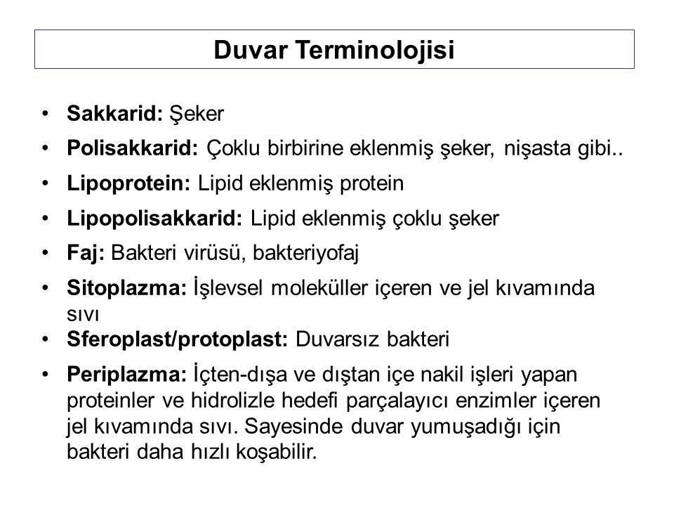 Duvar Terminolojisi Sakkarid: Şeker
