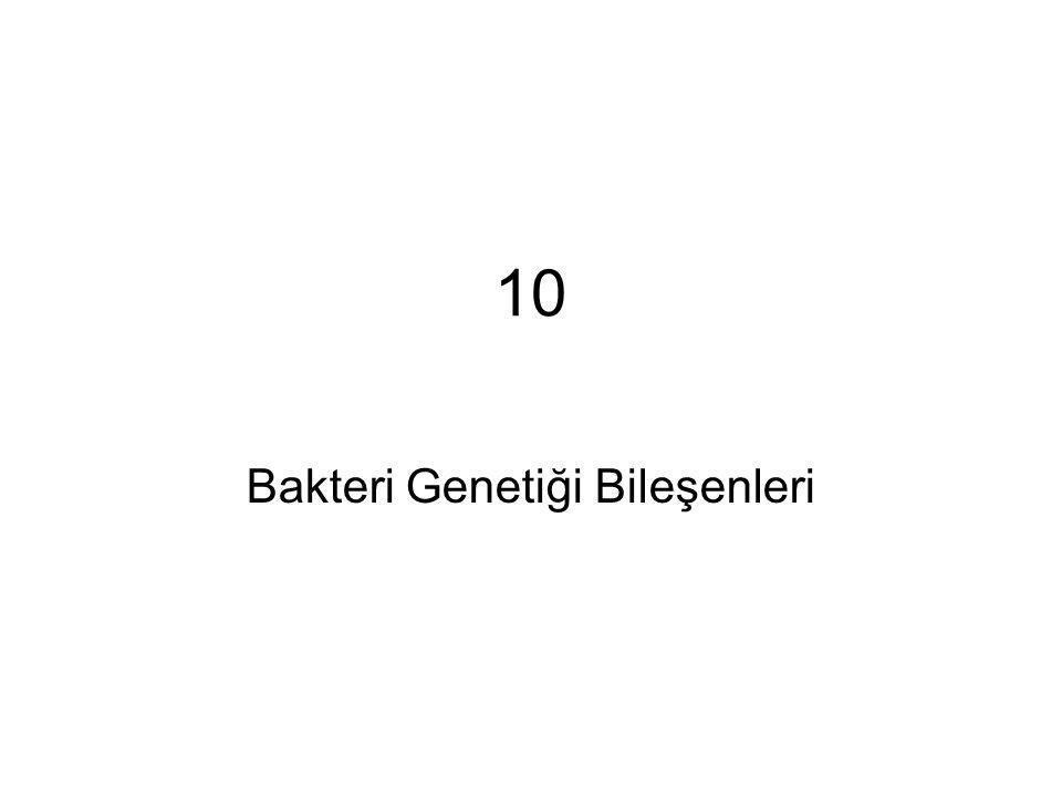 Bakteri Genetiği Bileşenleri