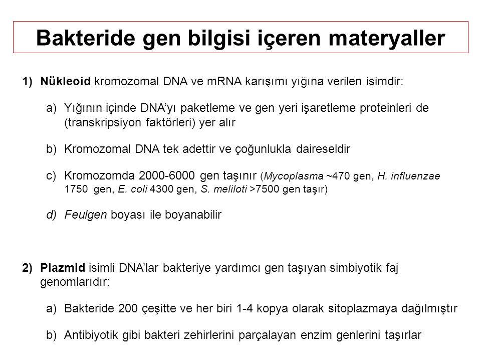 Bakteride gen bilgisi içeren materyaller
