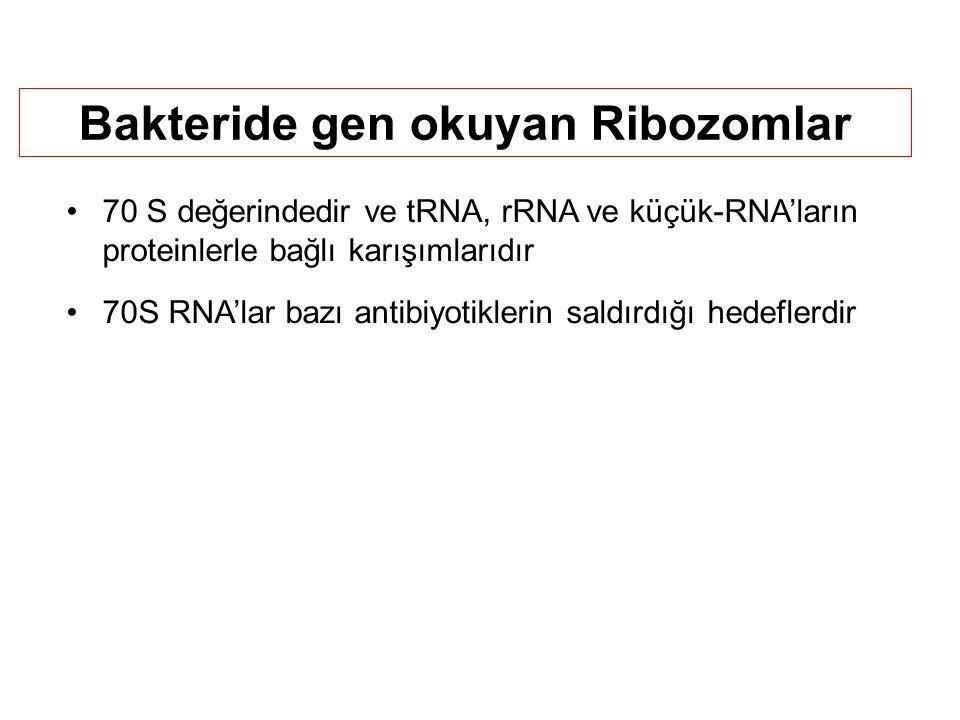 Bakteride gen okuyan Ribozomlar