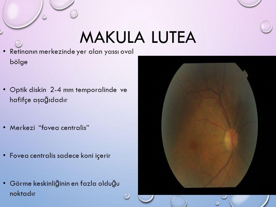 MAKULA LUTEA Retinanın merkezinde yer alan yassı oval bölge