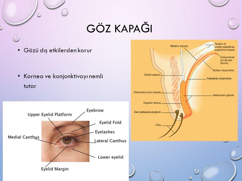 GÖZ KAPAĞI Gözü dış etkilerden korur