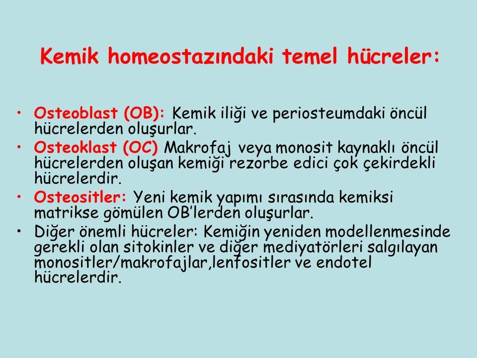 Kemik homeostazındaki temel hücreler: