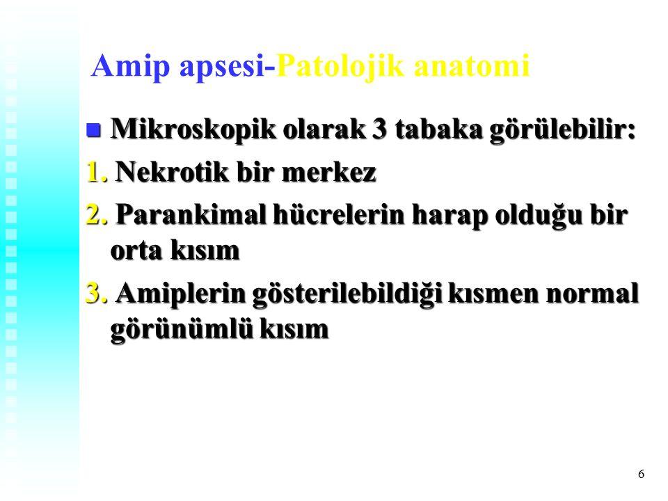 Amip apsesi-Patolojik anatomi