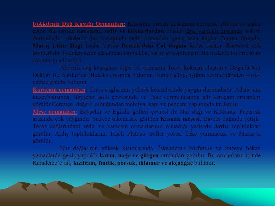 b)Akdeniz Dağ Kuşağı Ormanları: Kızılçam orman kuşağının üzerinde 2000m'ye kadar çıkar. Bu sahada karaçam, sedir ve köknarlardan oluşun iğne yapraklı ormanlar hakim durumdadır. Akdeniz dağ kuşağında sedir ormanları geniş saha kaplar. Bunlar doğuda, Maraş (Ahır Dağ) başlar batıda Denizli'deki Çal dağına kadar uzanır. Kerestesi çok kıymetlidir. Eskiden sedir ağacından tapınaklar, saraylar yapılmıştır. Bu nedenle bu ormanlar çok tahrip edilmiştir.