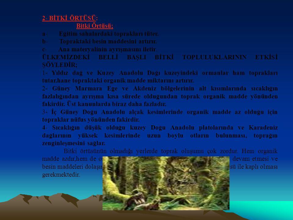 2- BİTKİ ÖRTÜSÜ: Bitki Örtüsü; a- Eğitim sahalardaki toprakları tüter. b- Topraktaki besin maddesini artırır.