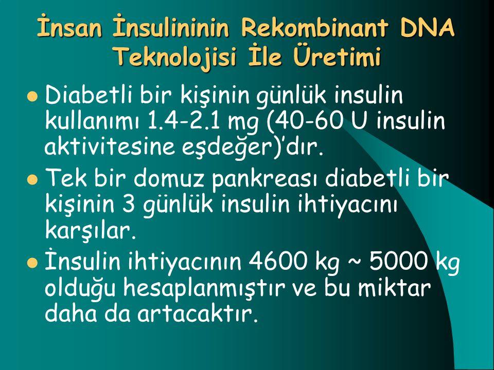 İnsan İnsulininin Rekombinant DNA Teknolojisi İle Üretimi